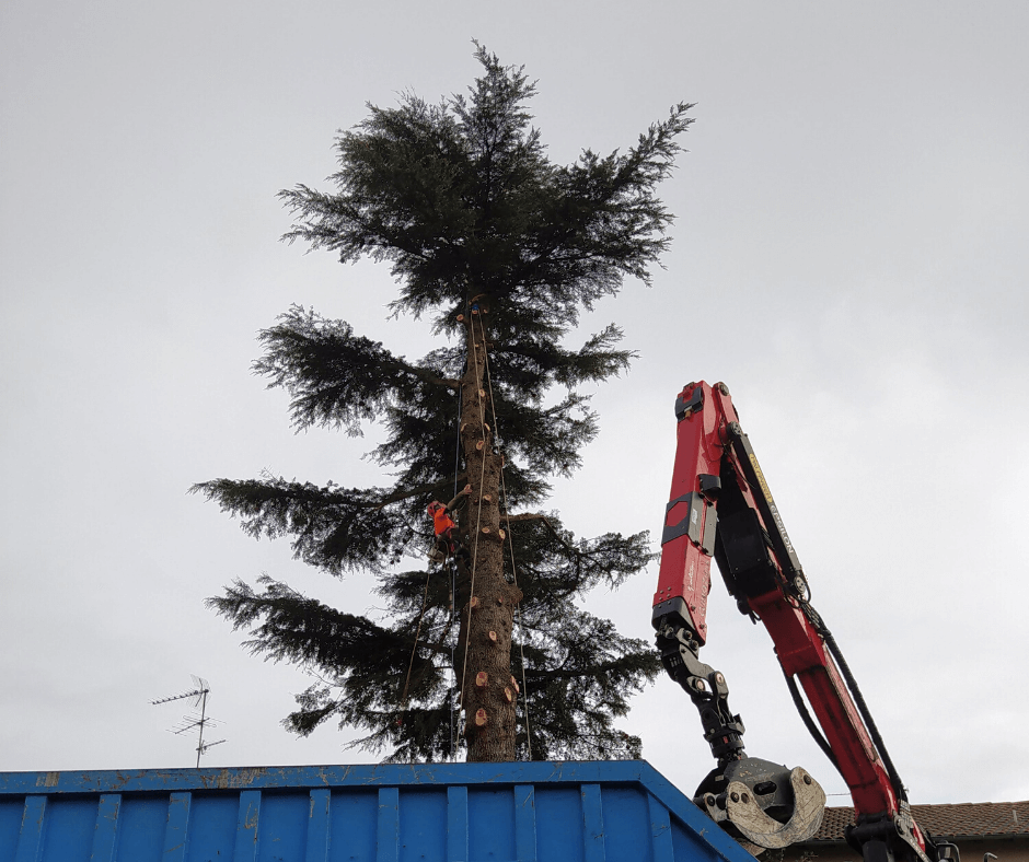 abattage_arbre_retention_toulouse_serpe.png